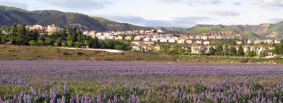 porter-ranch-lupine